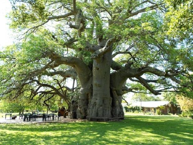 baobab2-resize