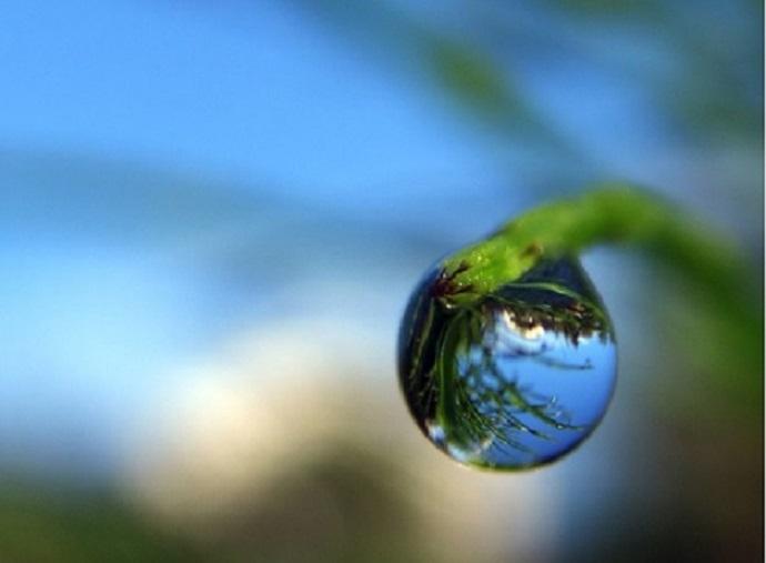 dewdrop (1)