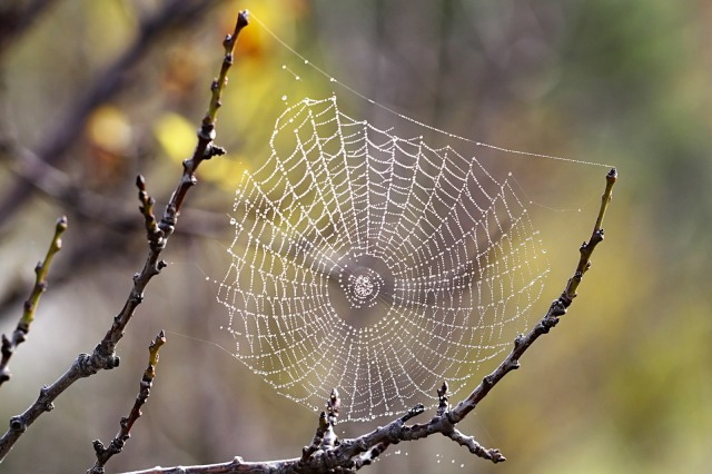 dewdrops-on-spider-web