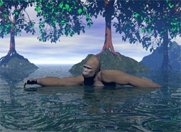 aquaticapeswim